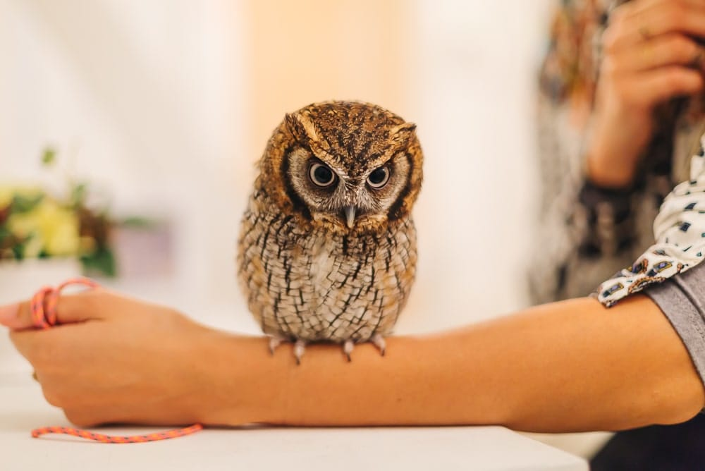 owl cafe japan, animal cafes in japan