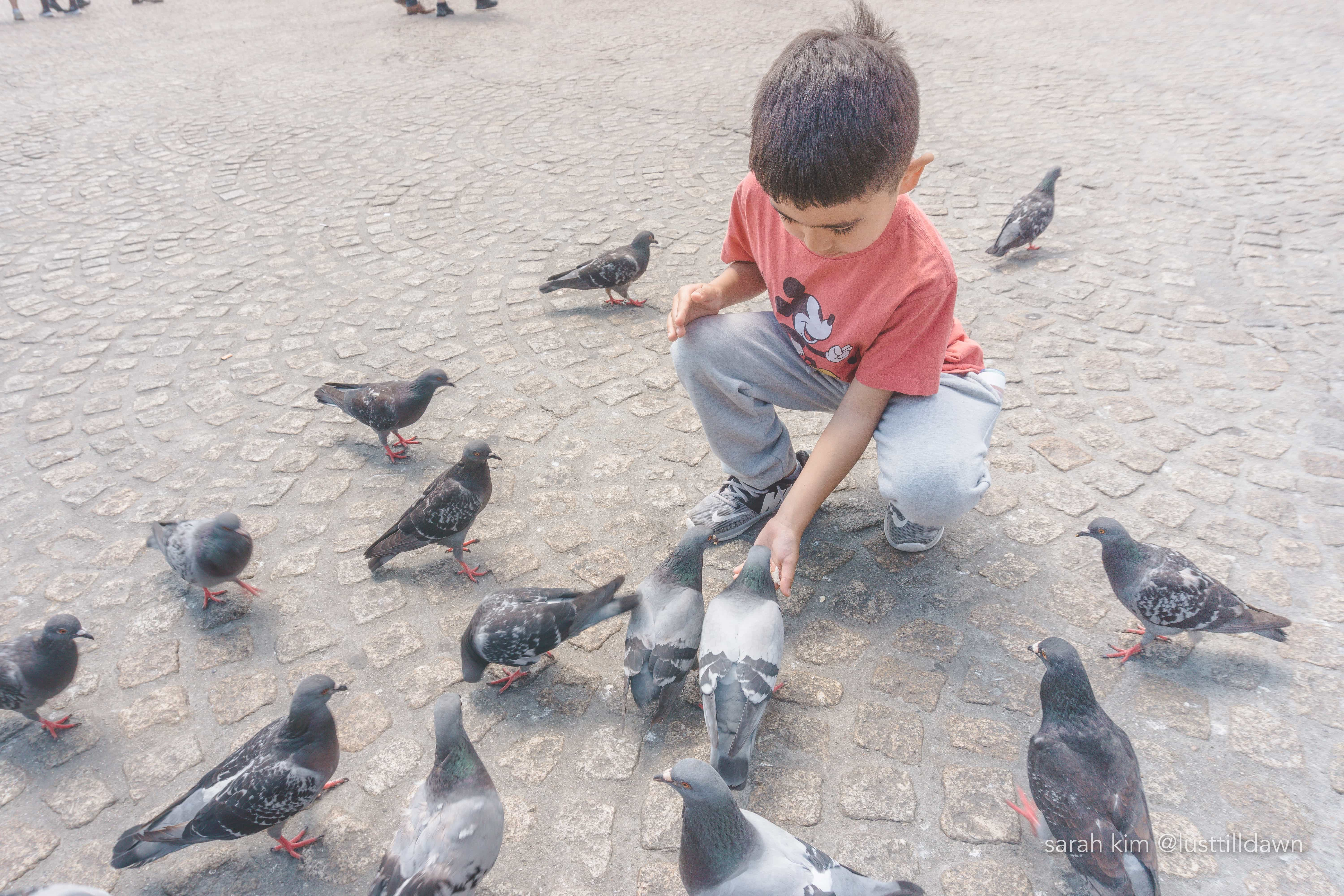 what to do in amsterdam with kids in the summer dam square pigeons