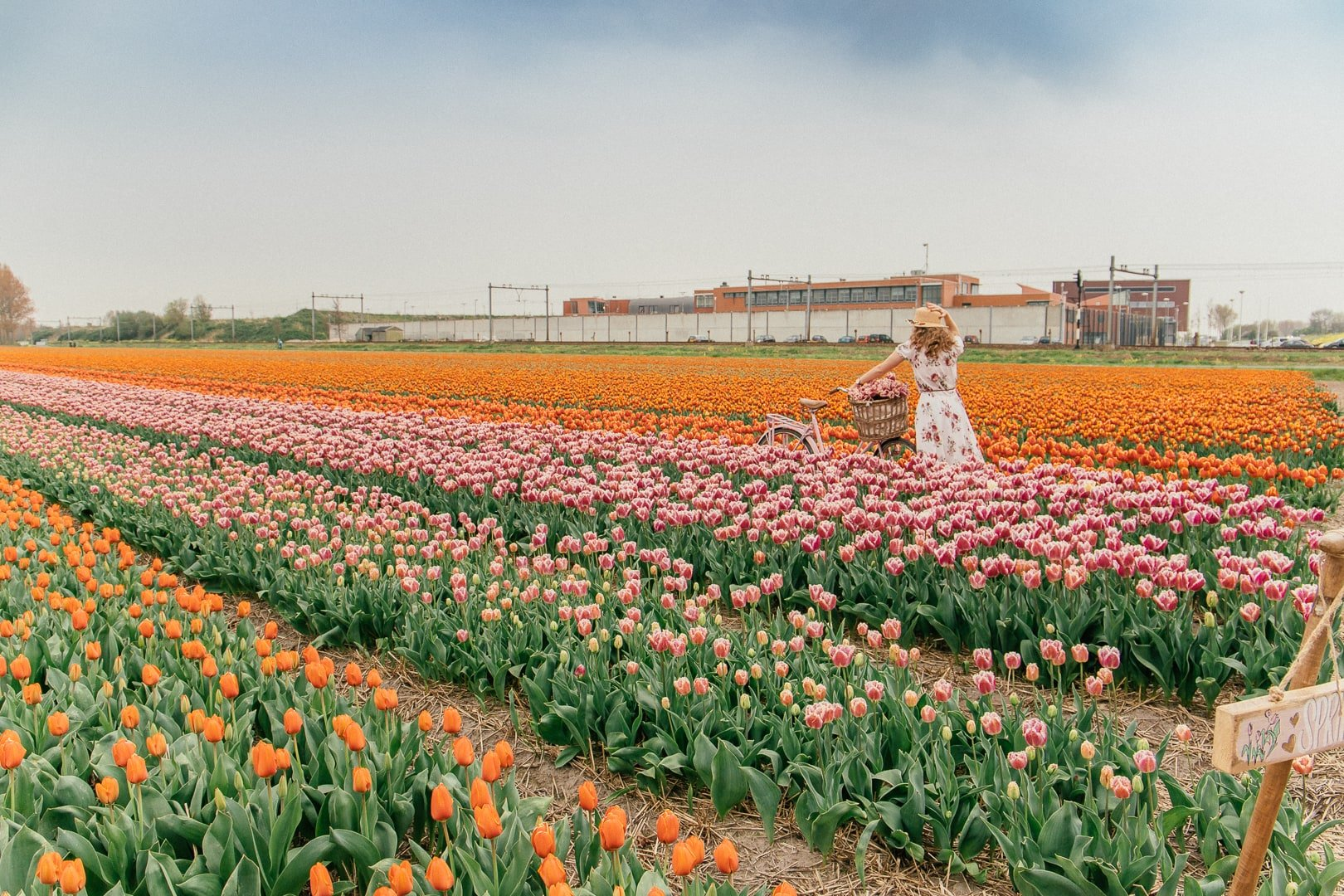 Woman in a colorful rows of tulips in the Netherlands